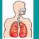 آلية التنفس عند الانسان